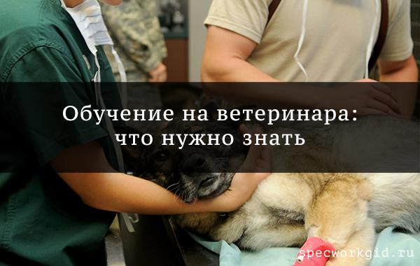 Тем, кто хочет поступать в ветеринарную академию: проходные баллы